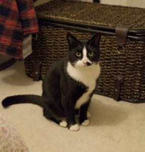 Emile and Victoria's cat - Boscombe Crescent
